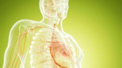 anatomi och fysiologi LäraNära